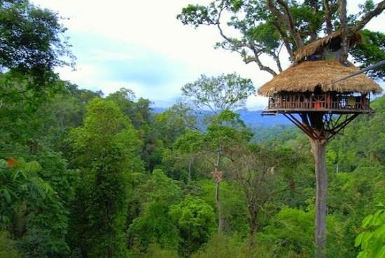 7 rumah pohon paling berbahaya di dunia intr pide